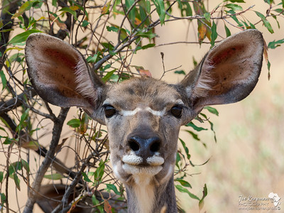 Ears up