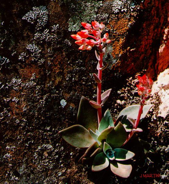 rock flower.jpg
