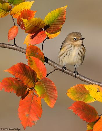 Best of bird Images