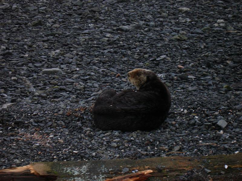 Alaska 2008 058.jpg