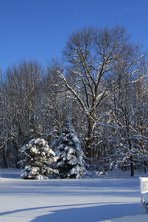 Snow Feb 19 2010
