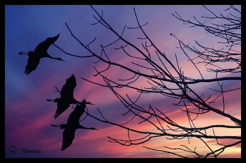 Cranes at Sunset.jpg