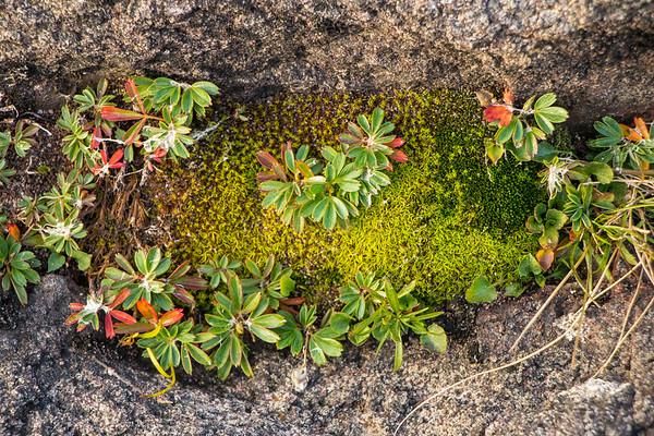 Flora, Fauna, and Fungi