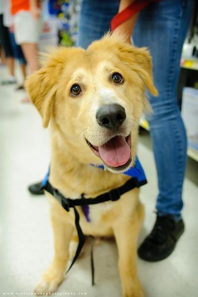 20110611 PetSmart Adoption Event-31.jpg