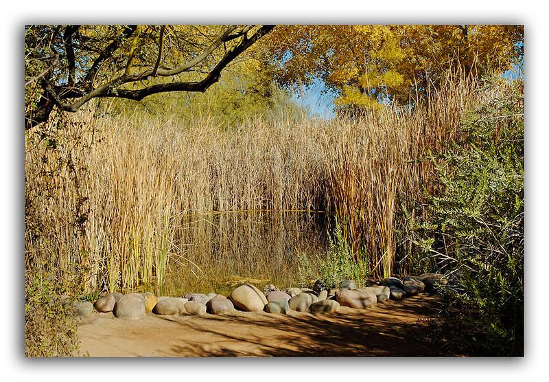 Desert-Pond.jpg