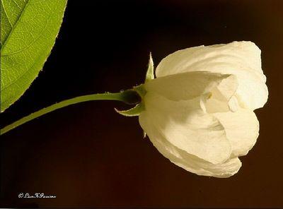 Blooms & Macros