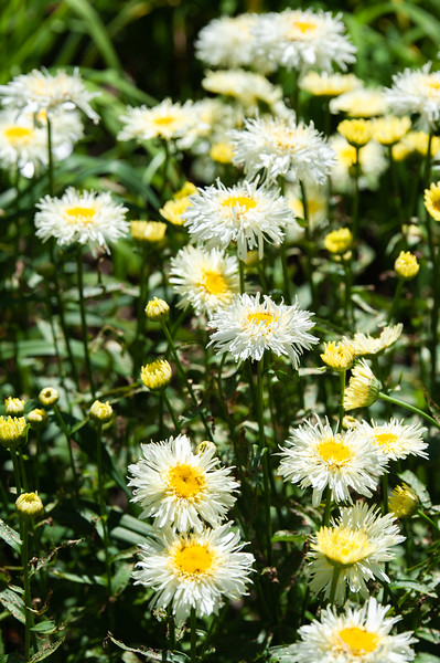 20190714 Daylilies and Flowers-6425.jpg