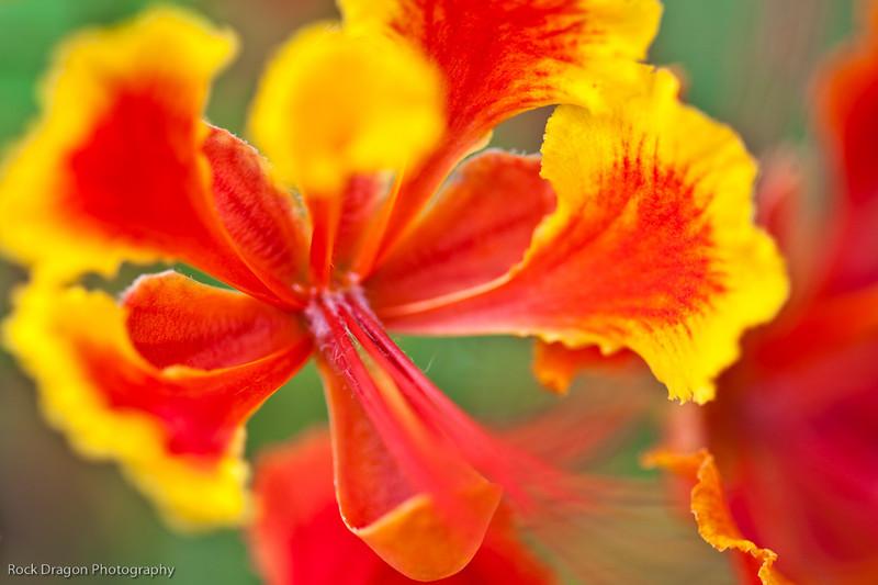 Flower,Calgary Zoo