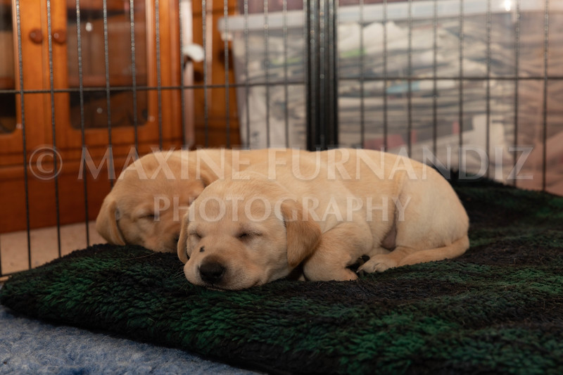 Weika Puppies 2 Mar 2019-8497.jpg