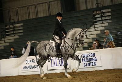 128A Arabian Hunter Pleasure Jr Horse Championship