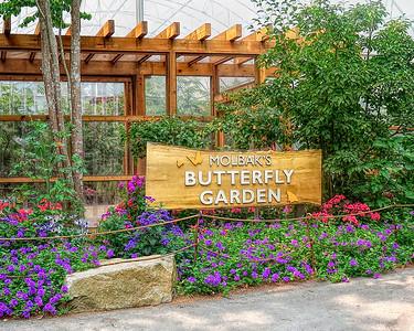 Molbak's Butterfly Garden
