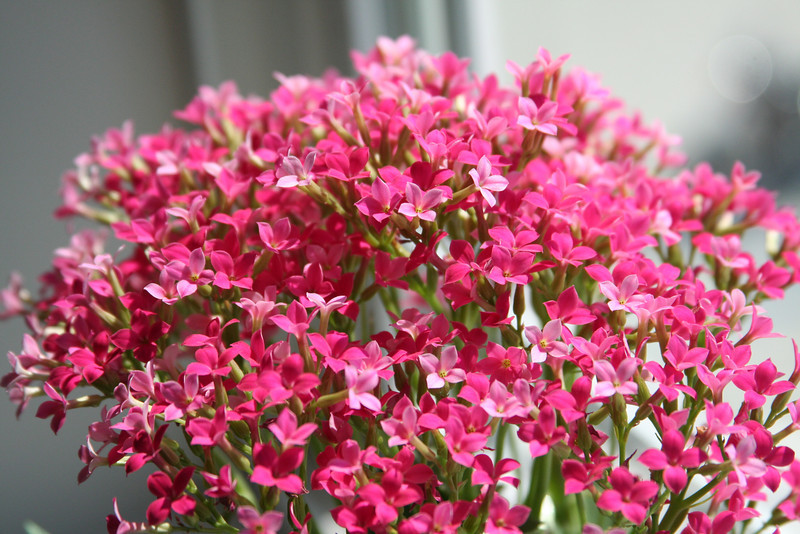 Flowers in Pink