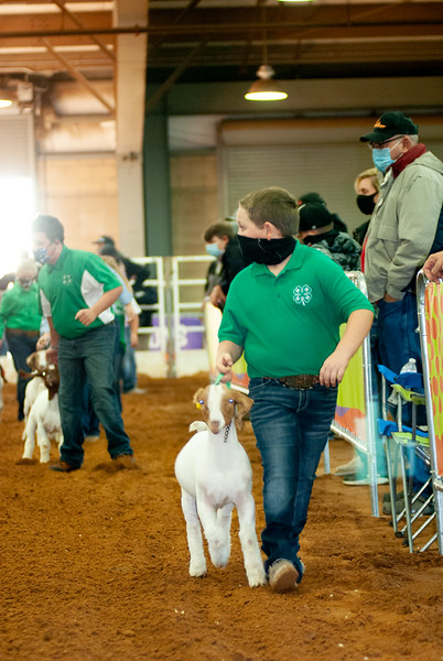 Tulsa Wether Goat Show