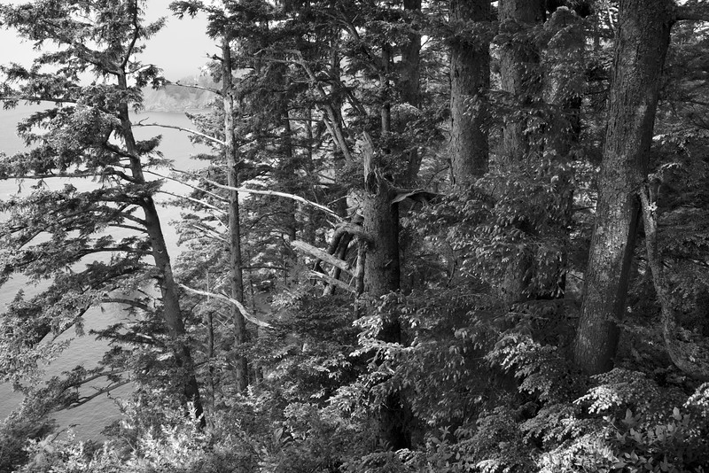 Being Nature in Black and White Oswald West State Park, OR June 2013