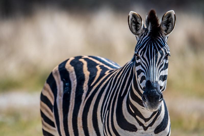 Botswana_June_2017 (622 of 6179).jpg