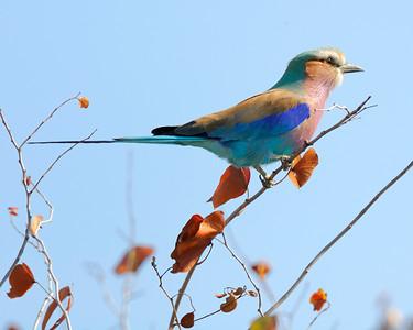 Kruger National Park I