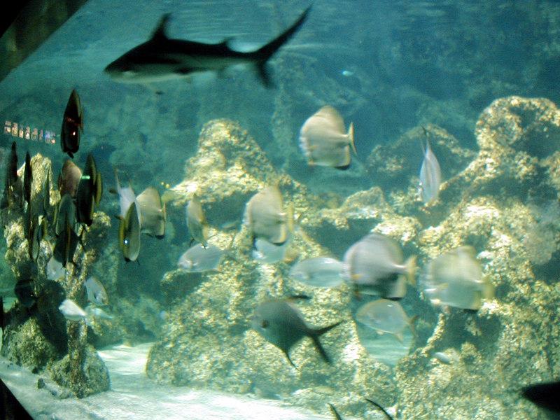 50.  Sydney Aquarium.JPG