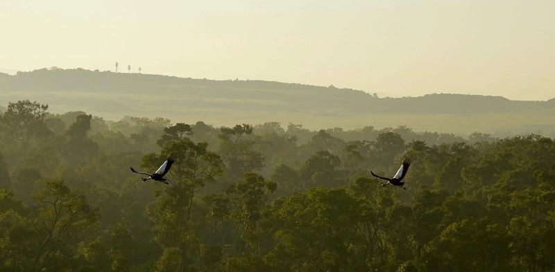In flight, Masai Mara, Kenya
