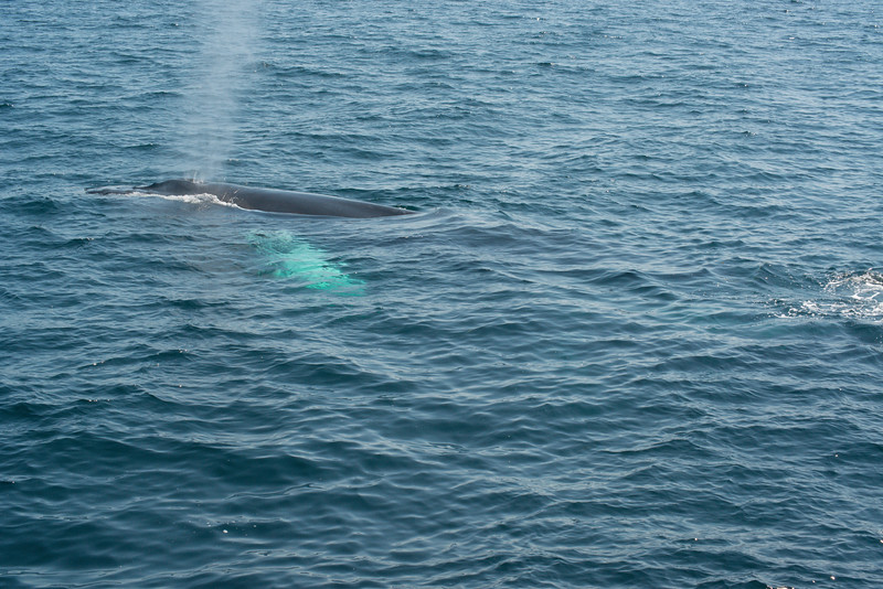 humpbacks-4203.jpg