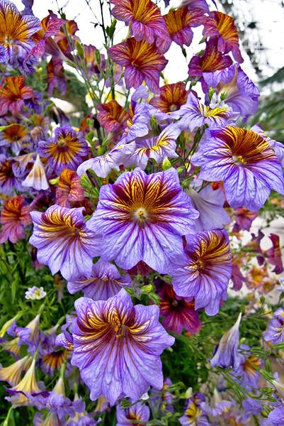 My favorite flower