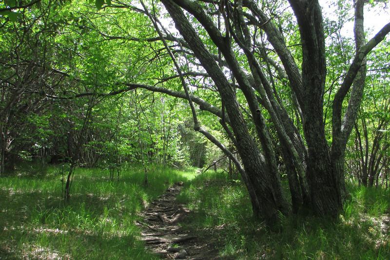 Mountains-to-Sea Trail (5,100')