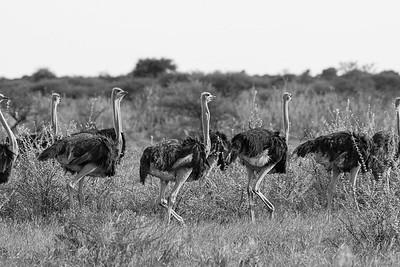 Kalahari 02 2012