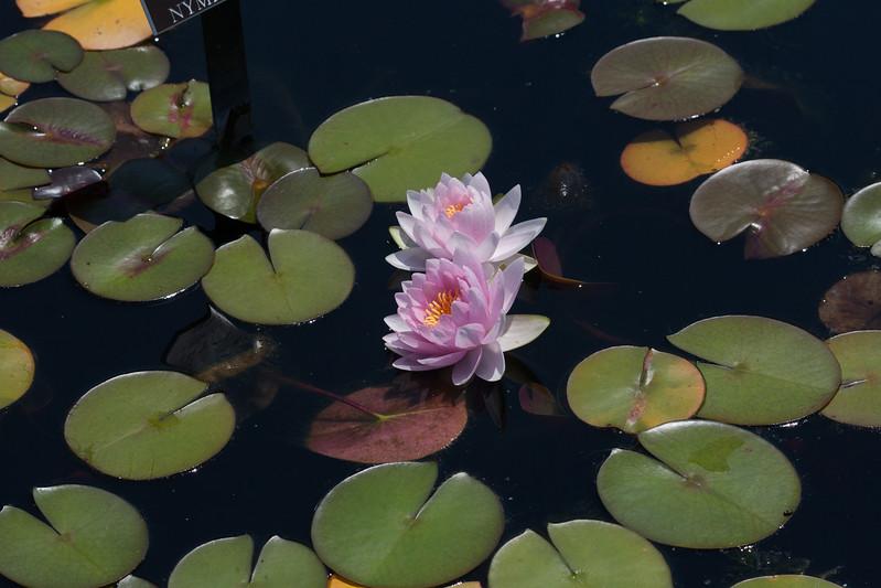 2009 06 30_NY Botanical Gardens_0716.jpg