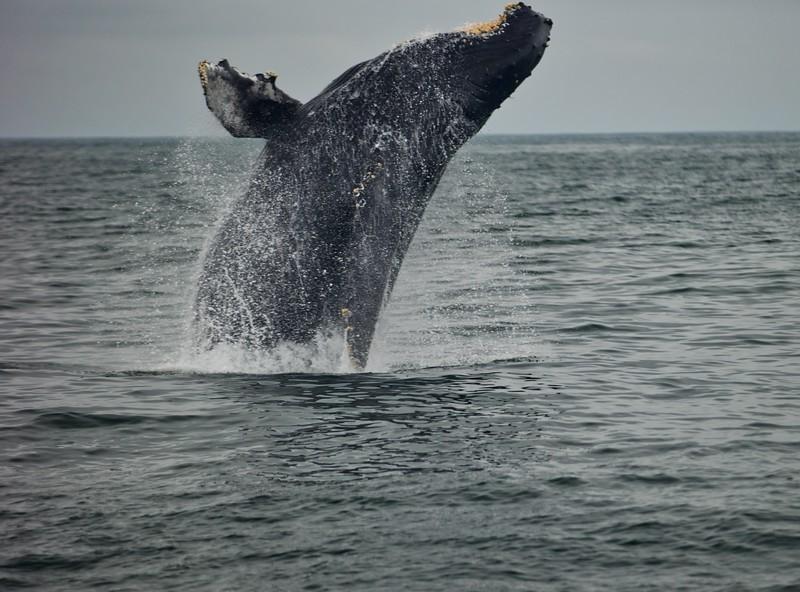 Whales2018-08-21 (6).jpg