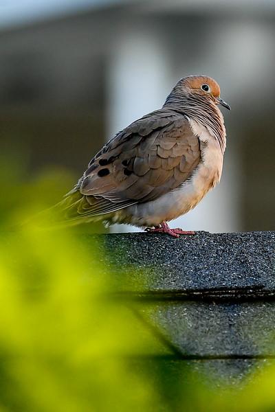 21MayHummingbirds (29 of 53).jpg