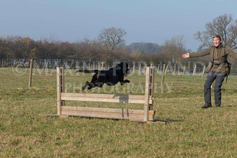 Dog Training Novice GD Feb2019-5979.jpg