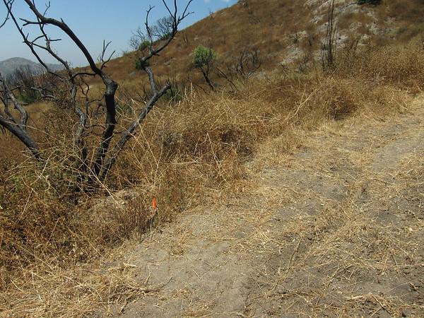 2010-07-10 - Doc Larsen Trailwork