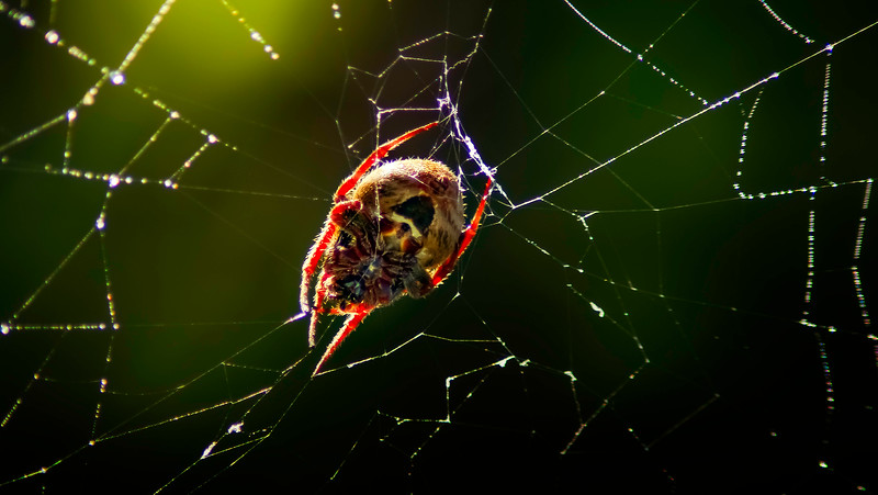 Spiders-Arachnids-060.jpg