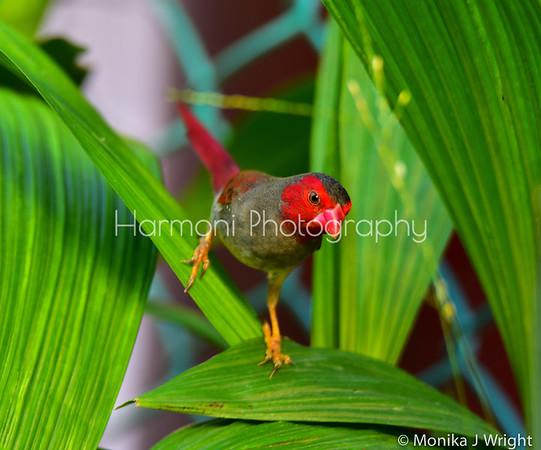 Harmoni Photography Darwin to Broome