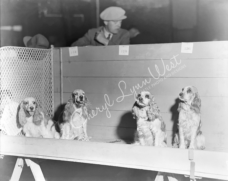 Cocker Spaniel 1932 - 5-WM.jpg