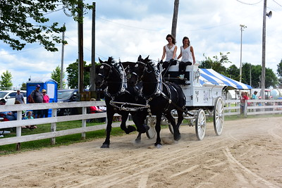 ladies percheron team