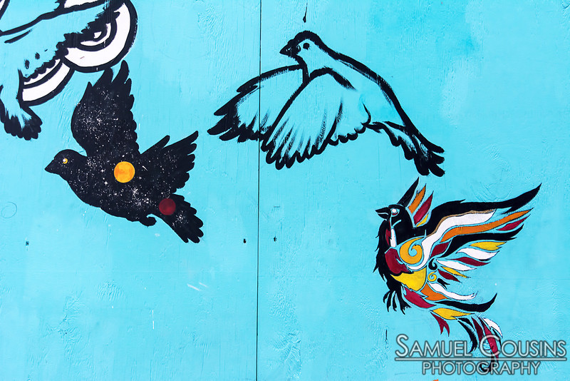 The Schwartz Building has been under renovation for a while. These birds are painted on the plywood covering up the first floor.