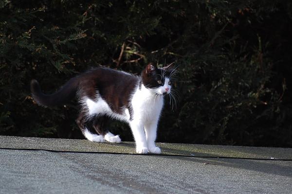 Jess the cat 01032010