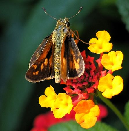 bugflower.jpg