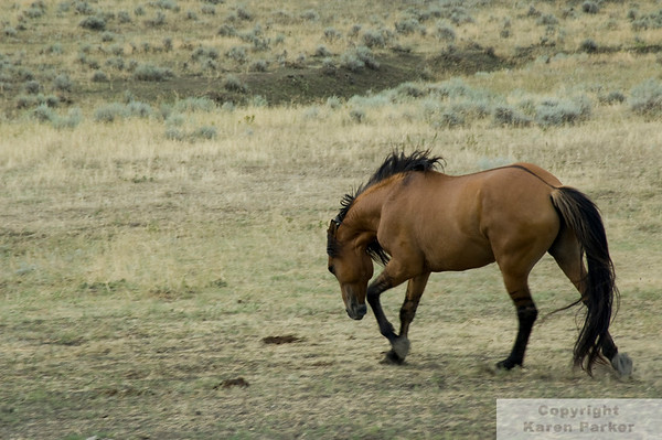 Black Hills Wild Horse Sanctuary - August/September, 2008