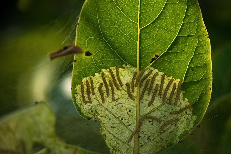 Dennis Stewart - Caterpillars.jpeg