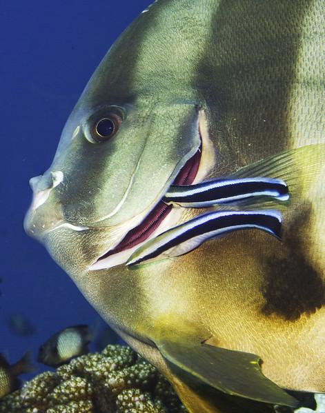 fish batcleaning11x_1.jpg