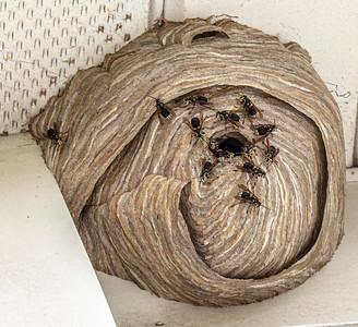 Wasp Nest, 8-21-19