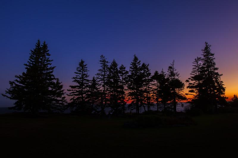 Pemaquid Point Pine Trees at Sunset Three.jpg