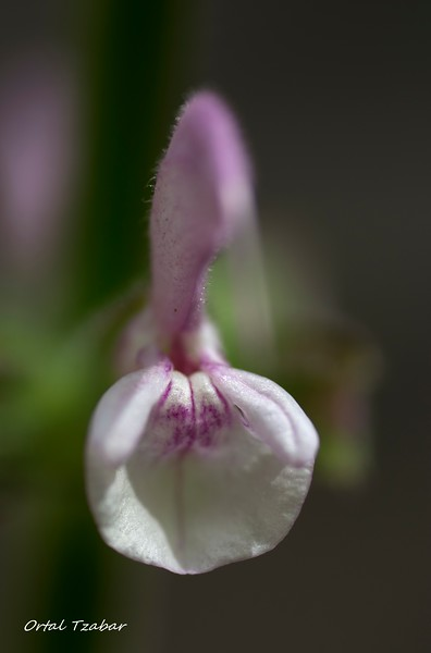 white purple.jpg
