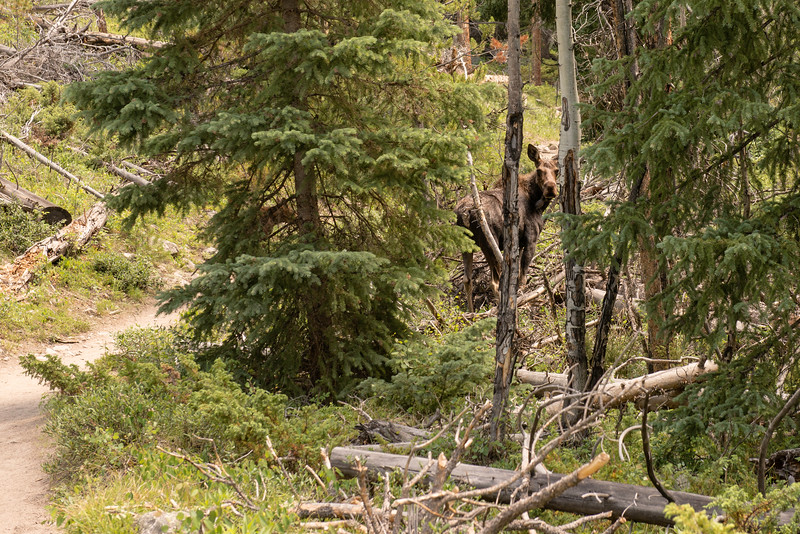 2017-07-08 Day 6 - Cascade Falls Hike and Rocky Mountain National Park 007.jpg