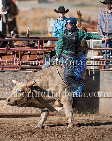 Broncs,Bulls & Steers