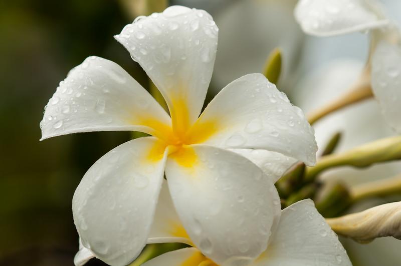 Sea Watch Flower 7