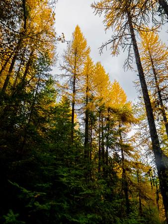 OCTOBER: WASHINGTON (State) III: Spokane Area