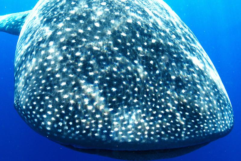 2014 Whale Shark - Cave Adventure-51.jpg