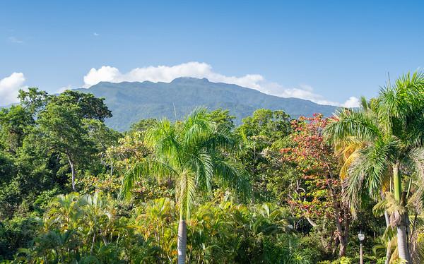 EL Yunque Rain Forest - Feb., 2020